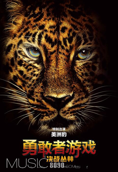 300KB/美洲豹